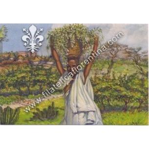 Fiori dell' Africa...